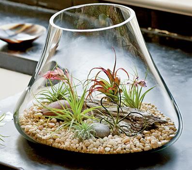 ساخت باغچه داخل لامپ,مدل های جدید تراریوم,آموزش تصویری ساخت تراریوم