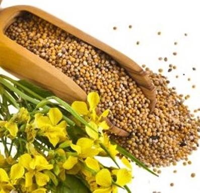 درمان درد پا با دانه خردل,دانه خردل,فواید دانه خردل,خواص دانه خردل