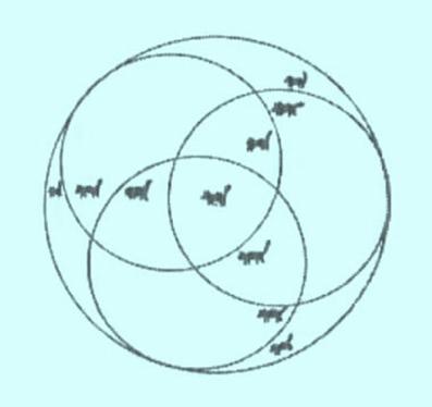 حل چیستان گربه داخل دایره,حل معمای گربه داخل دایره,حل تست هوش گربه داخل دایره