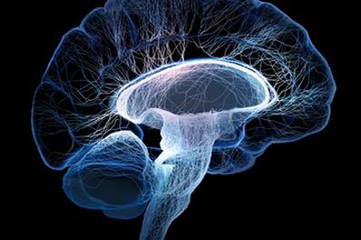 سبق الألكترونية,گوارش,کما رفتن مغز,خواب همیشگی مغز,اصلیترین دلیل کما چیست؟