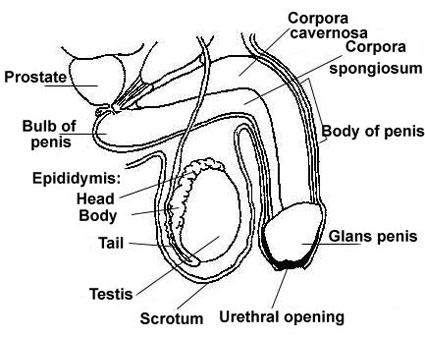 دستگاه تناسلی زنان,ضربه به ناحیه تناسلی,عفونت واژن,دانستنیهای جنسی
