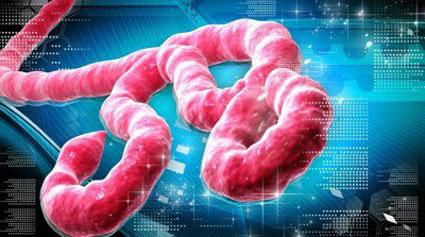 آشنایی با ویروس ابولا,درمان ویروس ابولا,ابولا,بیماری ابولا