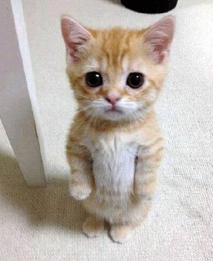 سایت عکس خنده دار,سایت سرگرمی,تصاویر خنده دار گربه